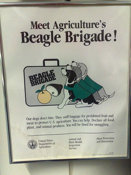 450px-Beagle_Brigade