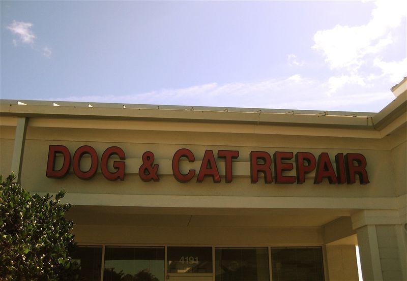 Cat repair by lisatozzi