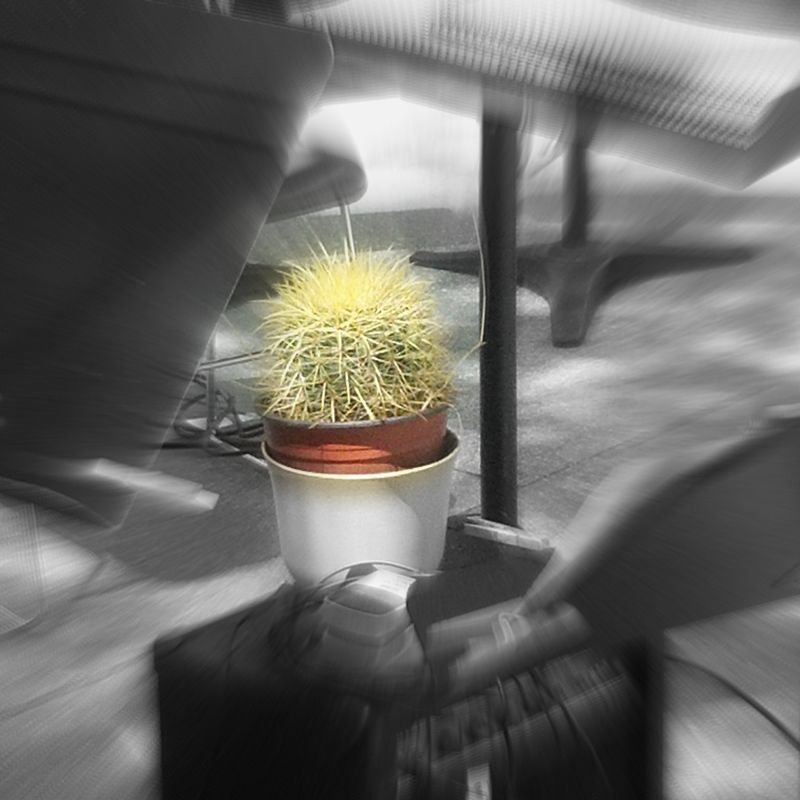 Zooming cactus