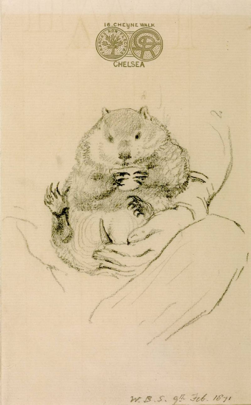 Rossetti's Wombat Seated in his Master's Lap