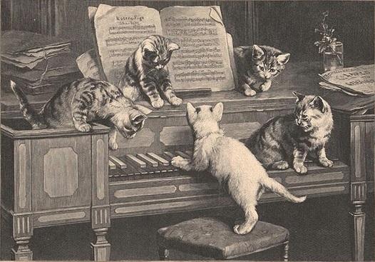 Katzenfuge
