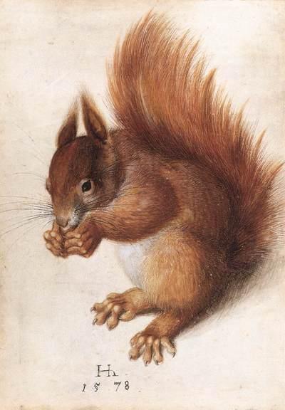 Hans_hoffman_squirrel_1