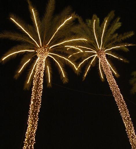 Christmas_palms